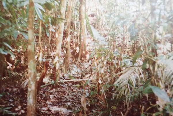 ジャングルの中